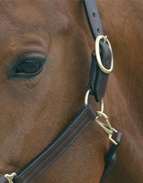 Headcollars and Leadreins
